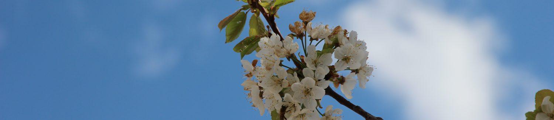 B & B La Primavera