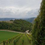 Wijngaard in Italie